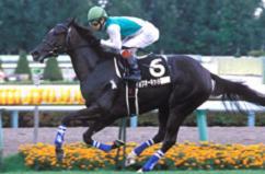 yamakatuo-kuddo00.jpg