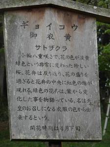 gyoikou05.JPG